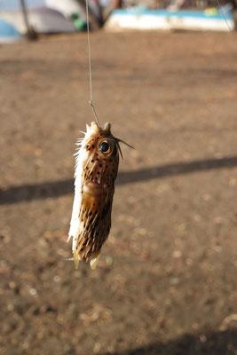 Ein Fisch fuer Miro ;-)