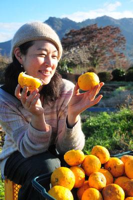 冬の里山の風物詩は柚子。
