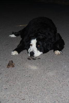 Hund und Frosch