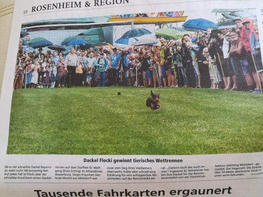 auch in Rosenheim wurde über unser Dackelrennen berichtet