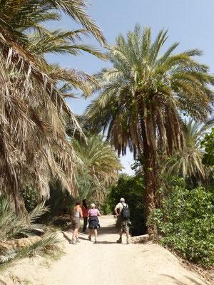 Balade très intéressante dans la palmeraie