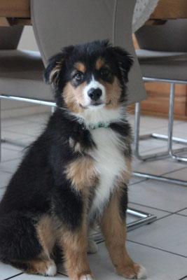 16 Wochen alt