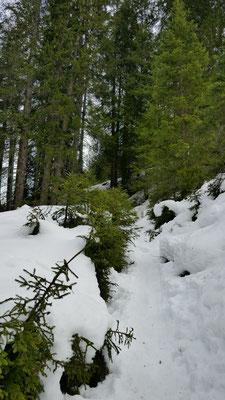 Dann doch in den Wald
