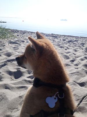 Am Strand alles im Blick