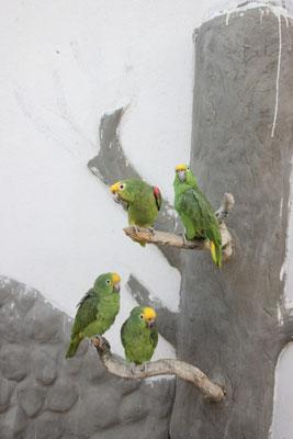 Das Hotel hatte Papageien.