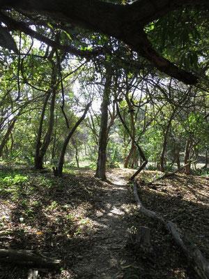 kurzer Spaziergang durch den Regenwald