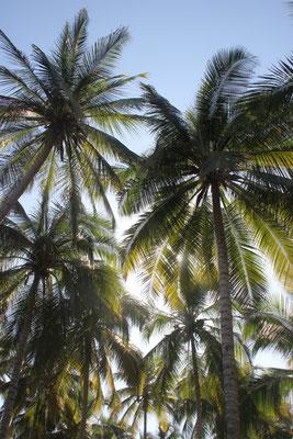 unter Kokospalmen