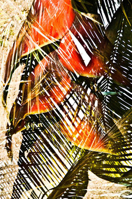 Licht, HD Metal Print, 50x75