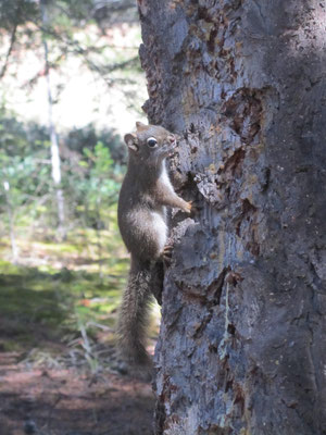 Das Aggrohörnchen