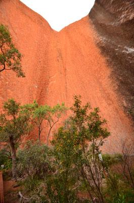 En face d'Uluru - Tous droits réservés : Trip85.com