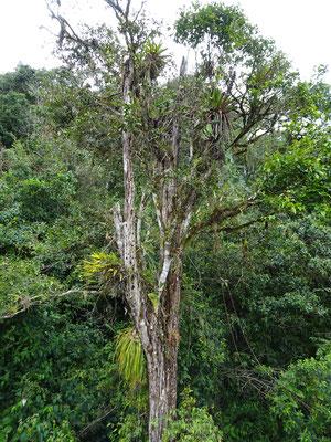 .....den Dschungel mit den Gerüchen...