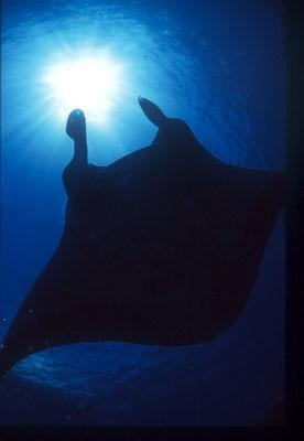 地球の海フォトコンテスト2019  自由部門 入選 「静寂」 広瀬 晴夫  ニコンF4 AFフィッシュアイニッコール16㍉F2,8D  ネクサスF4PRO  自然光 f5,6 1/60秒 RVP  石垣島 -10㍍