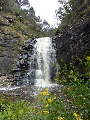 Sheoak falls