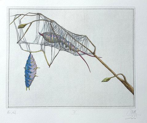 Ulf H. Rickmann, Blatt IV (Insektenserie) Strichätzung koloriert, 20x15cm, 2020 - 300 EUR