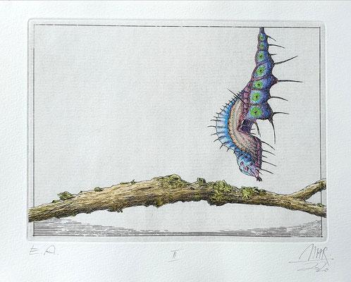 Ulf H. Rickmann, Blatt II (Insektenserie) Strichätzung koloriert, 15x20cm, 2020 - 200 EUR