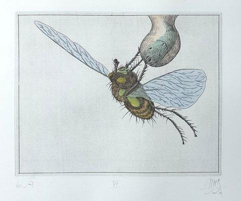 Ulf H. Rickmann, Blatt VII (Insektenserie) Strichätzung koloriert, 20x15cm, 2020 - 300 EUR
