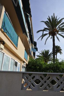 Blick an Palmen vorbei auf die Balkone...