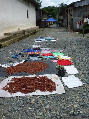 On fait sècher le cacao et le linge sur le sol