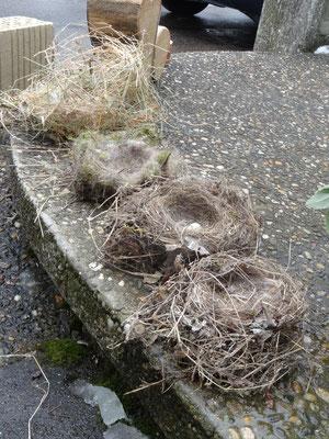 Verschiedene Nesttypen