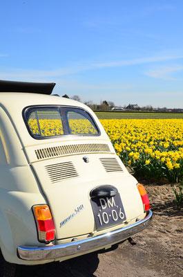Visite de la région des fleurs dans notre Fiat 500 classique