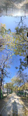 Pano Long arbre 11