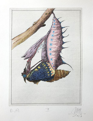 Ulf H. Rickmann, Blatt III (Insektenserie) Strichätzung koloriert, 20x15cm, 2020 - 300 EUR