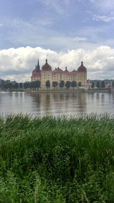 Das Schloss Moritzburg.