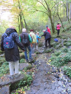Vorsichtig wanderten wir durch die lauschige Waldlandschaft.