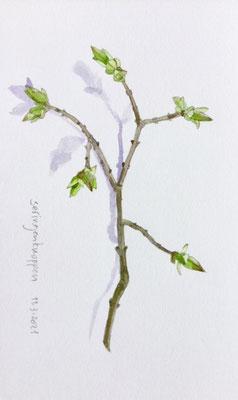 11-3-2021: Lilac buds, Annette Fienieg