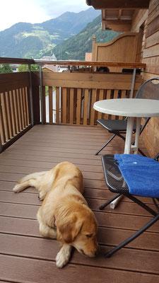 Unsere Schweineöhrchen essen wir auf dem Balkon des Hundehotels Riederhof, im Hintergrund schaut ein armer Hund nur zu und hat kein Ohr, ojeee