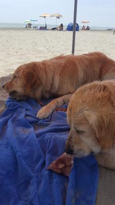 essen natürlich unser Schweineohr am Strand