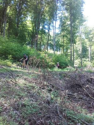 Die Abfahrt im Wald bei Kleinaltenstädten ....