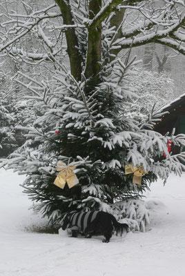 Weihnachtsbaum auf dem Hof