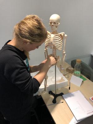 Erst mal musste das Skelett zusammen gebaut werden...