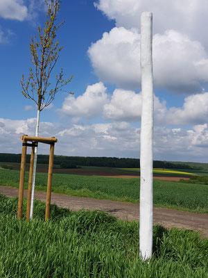 Eiche und Stele auf dem Weinberg mit Blick Richtung Limesstein und Rommelhausen