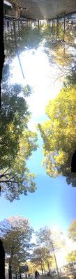 Pano Long arbre 14