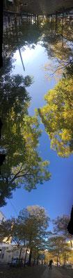 Pano Long arbre 16