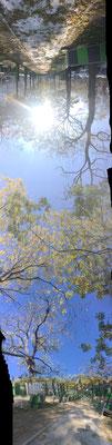 Pano Long arbre 10