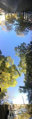 Pano Long arbre 15