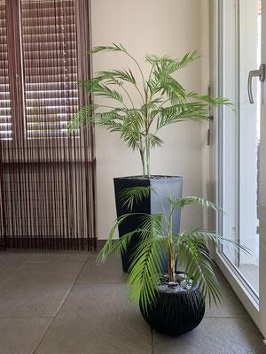 Palmenblätter in Anthrazit-Gefässen