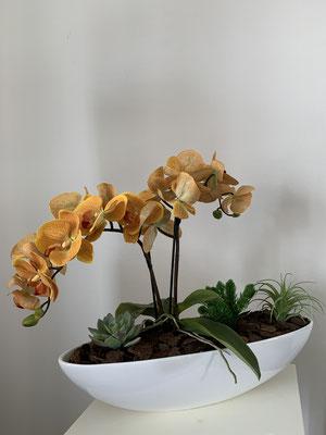 orange orchideen in schiffchen