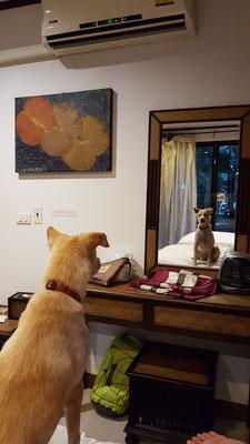 immer wieder lustig wenn sich Hunde das erste Mal im Spiegel sehen