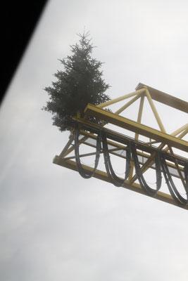 シュヴァルツヴァルト「黒い森」ハウザッハにある製材所のクリスマスツリー2016
