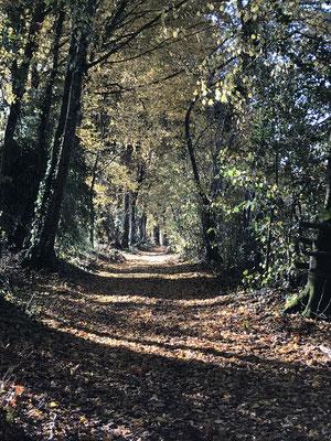 Randonnée au départ de l 'Escale en Corrèze .