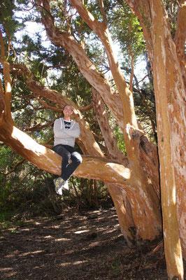 Rando dans la forêt d'arrayanes ...