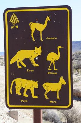 La faune en Patagonie