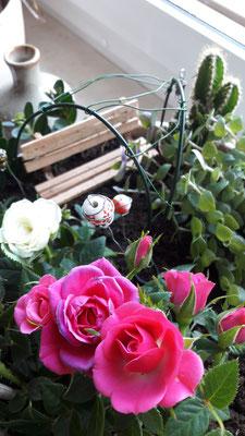 Floristik & Pflanzendeko - Kreative Ideen