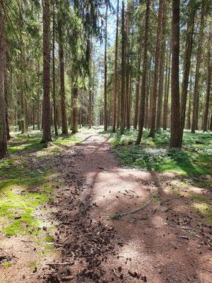 Wundervolle Waldwege ...
