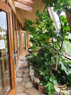 Vorgelagerter Klimarauch, der sich über die Fensterfront aufheizt
