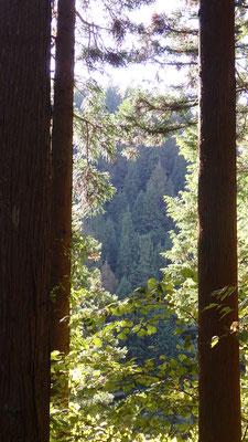 林間現れたウィリアム・モリスと東山魁夷のコラボ